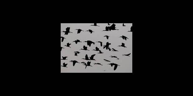 Un atlas wallon des oiseaux - La Libre