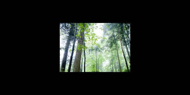 Des forêts millénaires en péril - La Libre