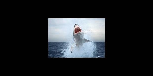 La peur des requins s'empare de La Réunion - La Libre