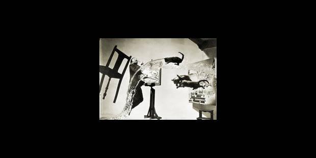 Les 28 jets de chats pour Dali - La Libre