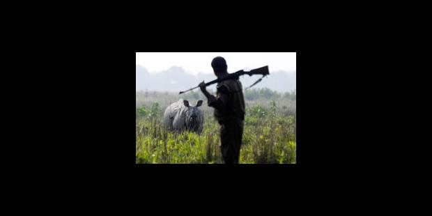 Peut-on encore sauver les rhinocéros ? - La Libre
