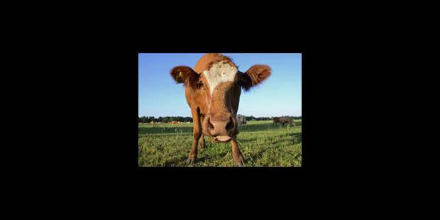 Un producteur belge découvre de la dioxine dans sa nourriture pour bétail - La Libre