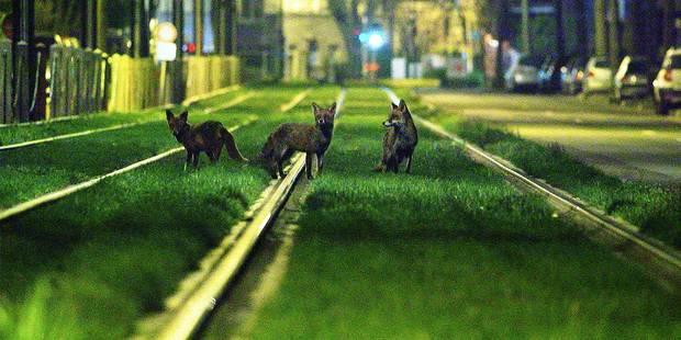 Sur la piste de la faune sauvage - La Libre