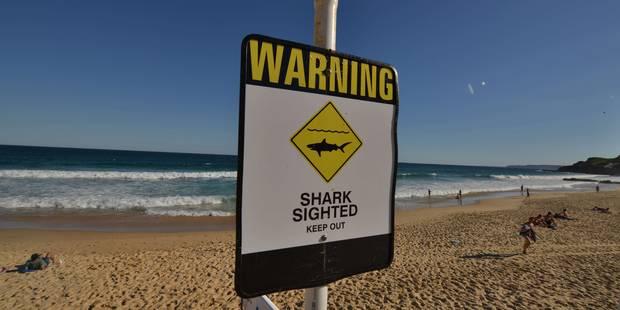 Un homme tué par un requin en Australie, les jambes arrachées - La Libre