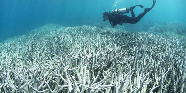 """En Australie, 93 % de la Grande barrière de corail a blanchi suite à """"une anomalie météorologique"""" (VIDEO) - La Libre"""