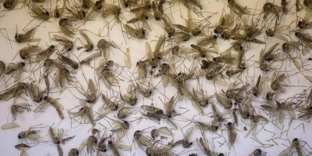 Zika doit-il refroidir la fièvre olympique ? - La Libre