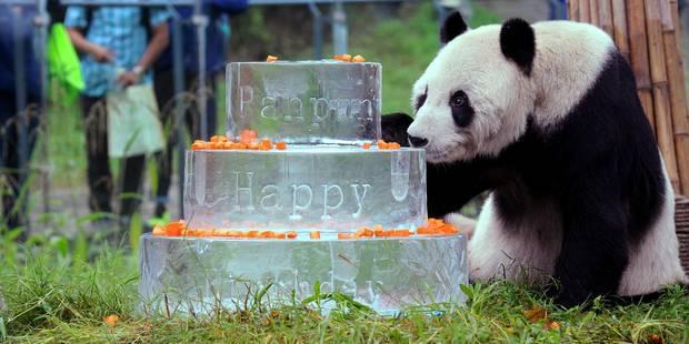 Chine: Pan Pan, le plus vieux panda mâle du monde, est mort - La Libre