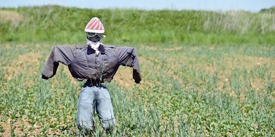 La météo folle pousse les agriculteurs à bout, la recherche va-t-elle offrir une solution? - La Libre