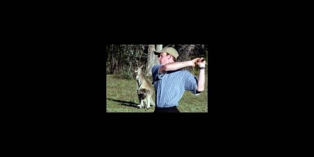 Les Kangoutrous du golf de Stanthorpe - La Libre