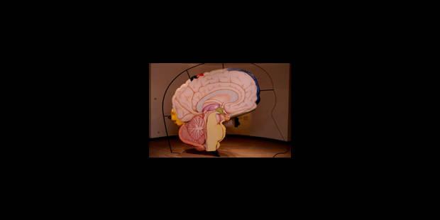 Le cerveau des enfants bilingues serait plus performant - La Libre