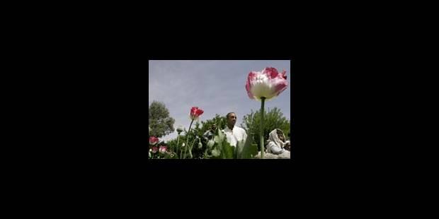 L'opium comme allié en Afghanistan - La Libre