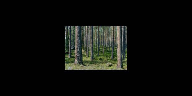 Des forêts artificiellement naturelles - La Libre