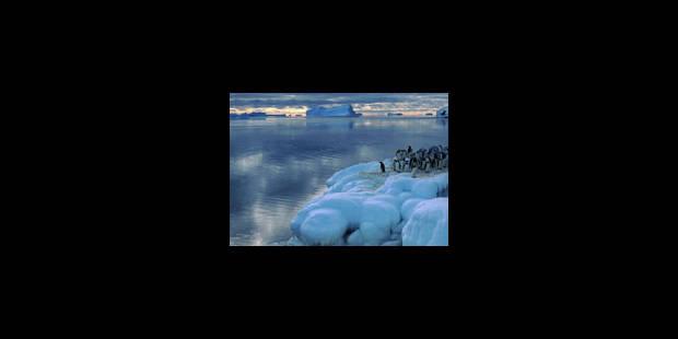 Richesse de la faune océane polaire - La Libre