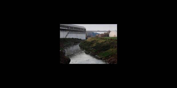Pollution de la Senne: tous les poissons ont disparu - La Libre