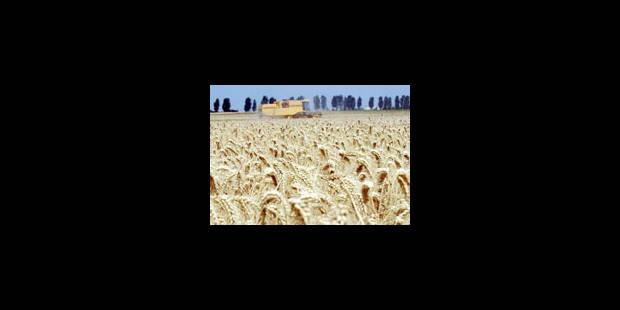 Le blé et le sucre dopés par le dollar et la spéculation - La Libre