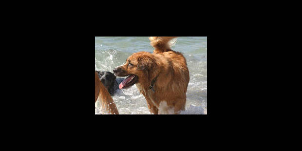 Des chiens au secours de la détection du cancer de la prostate