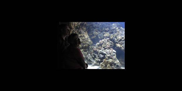 Australie : Appel à protéger la biodiversité unique de la mer de Corail - La Libre