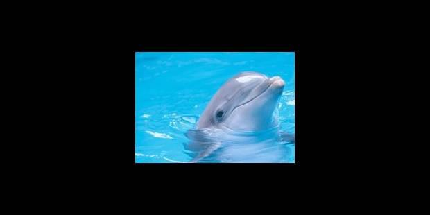 Étrange rite funéraire de la part d'un dauphin