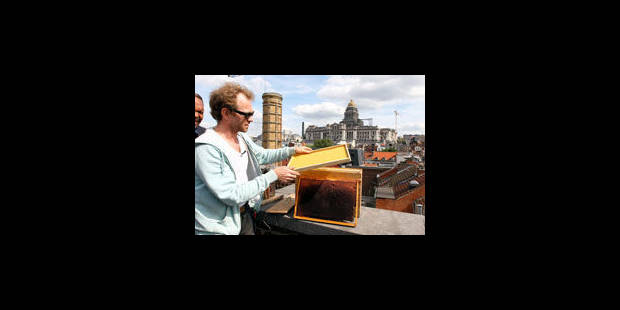 Des abeilles sur les toits