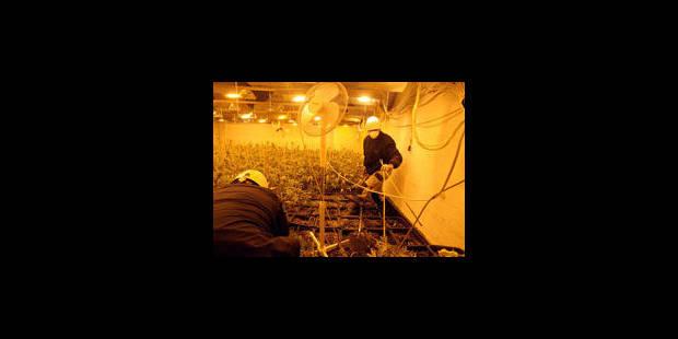Les plantations s'enracinent - La Libre
