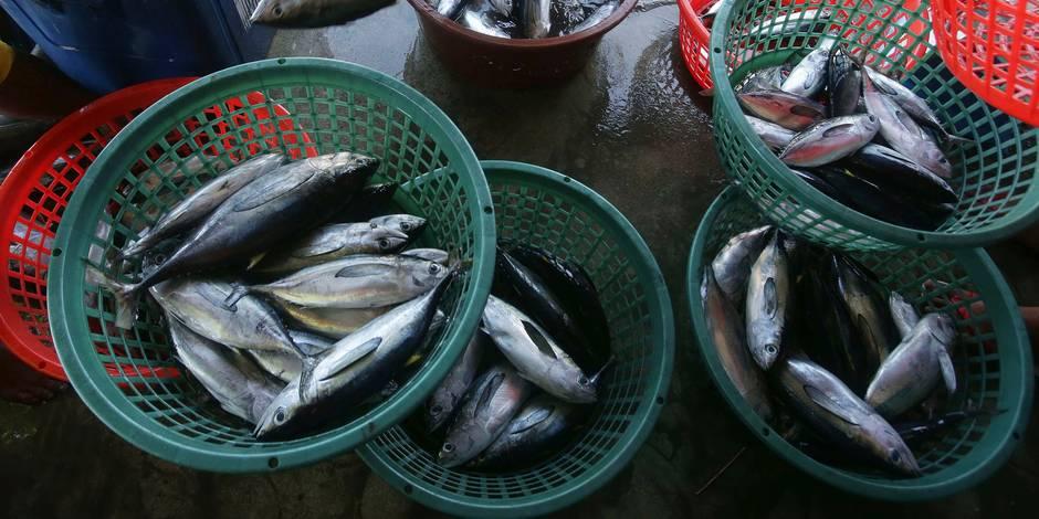 Moins de surpêche européenne en 2012