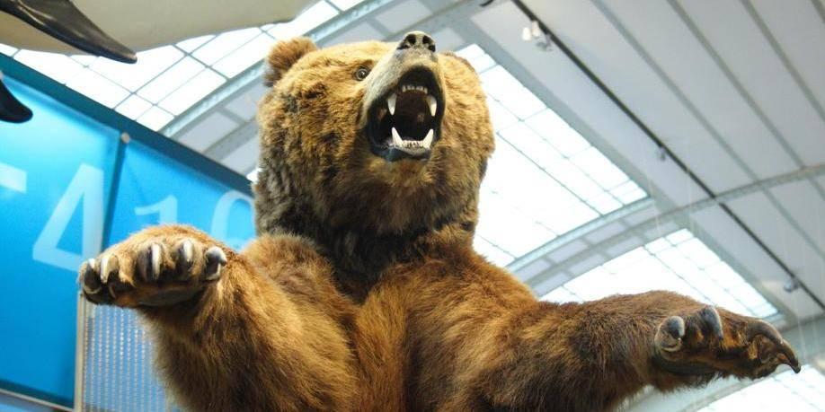 Musée des sciences naturelles gallerie évolution animaux