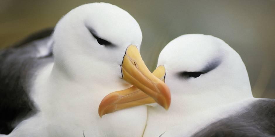 Près de 200 espèces d'oiseaux proches de l'extinction dans le monde