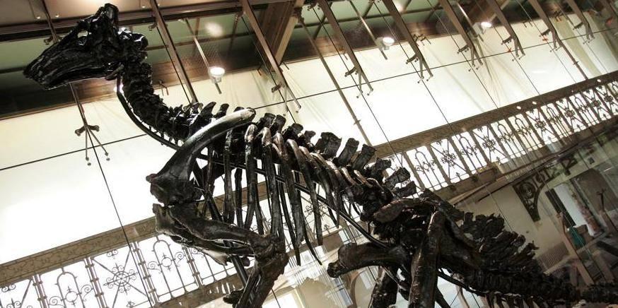 News: Restauration iguanadons