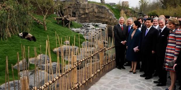 Le président chinois inaugure le pavillon des deux pandas de Pairi Daiza - La Libre