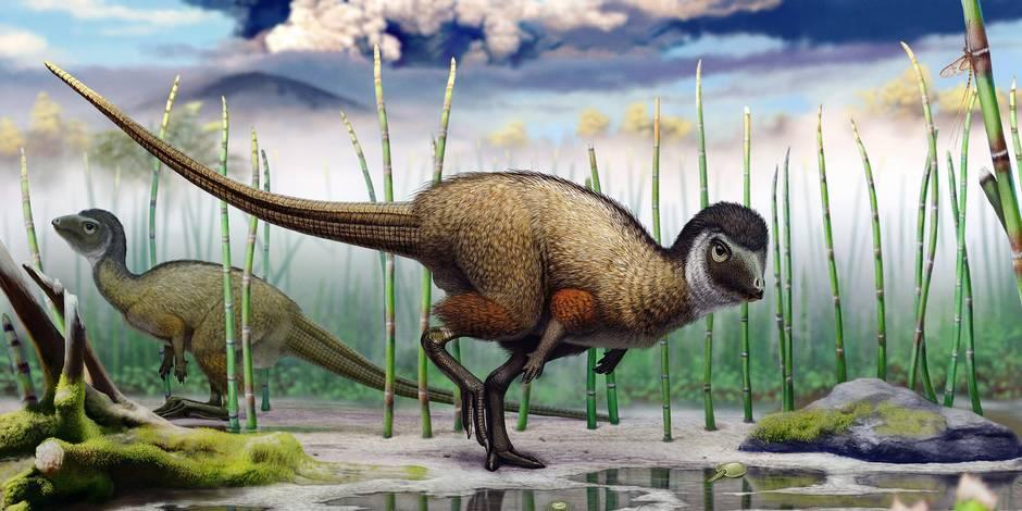 Tous les dinosaures portaient des plumes, selon un paléontologue belge
