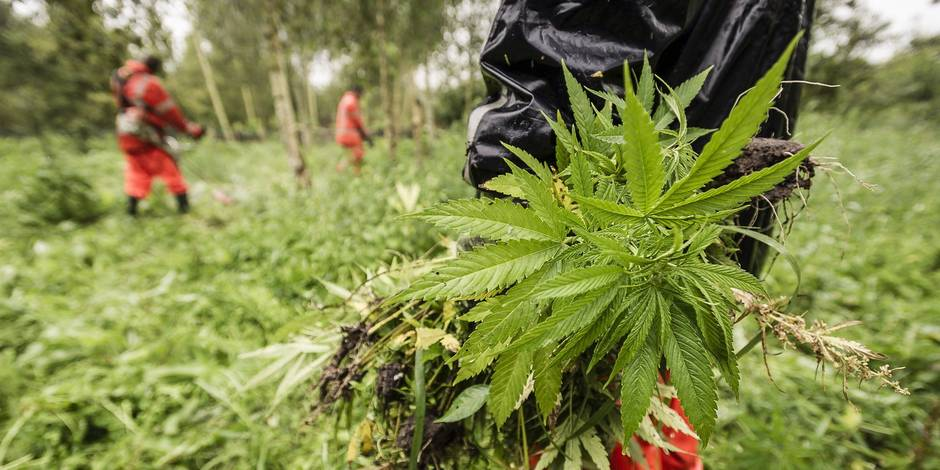 La consommation et la possession de cannabis à nouveau poursuivies