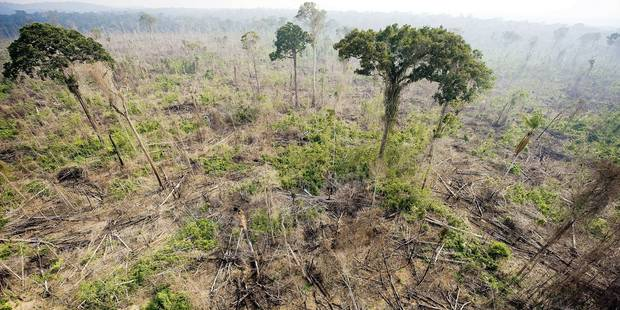 (FILES) An aerial view taken on November 29, 2009 shows a burnt out sector of the Jamanxim National Forest at an illegal settlement , in the Amazon state of Para, nothern Brazil. The Intergovernmental Panel on Climate Change (IPCC) presented in Copenhagen on November 2, 2014, the AR5 Synthesis Report -- the first overview by the Nobel-winning organisation since 2007 -- ahead of UN talks in Lima to pave the way to a 2015 pact in Paris to limit warming to a safer 2 C. AFP PHOTO ANTONIO SCORZA