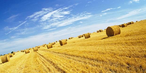 Bales of hay in field Model Release : Not applicable Property Release : Not applicable PhotoAlto / Reporters Ref : FAIAGX000005