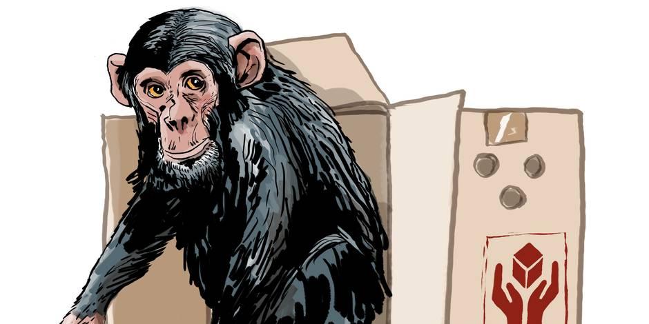 Les animaux auront-ils bientôt des droits fondamentaux?