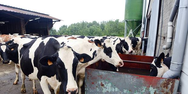 Ferme fermier lait vache bovin laiterie Ardennes camion récolte champs agriculteur planète bio Afsca contrôle sanitaire laitier veau élevage éleveur producteur étable aliment alimentation nourriture foin