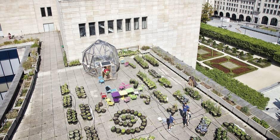 Des légumes sur le bitume: le point sur le boom de l'agriculture urbaine