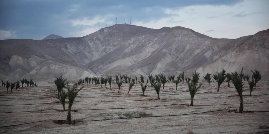 Israël s'apprête à annexer 150 hectares de terres agricoles en Cisjordanie