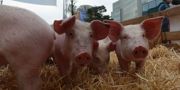 Les agriculteurs protestent (encore) contre la chute des prix à Bruxelles - La Libre