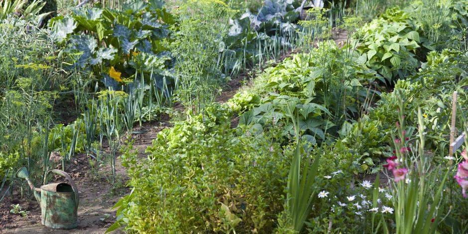 Légumes et fleurs en belle compagnie