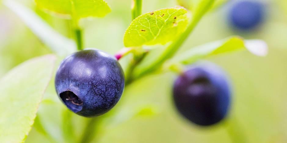 "A la recherche des ""fruits miracles"""
