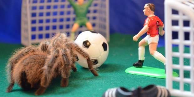 Une étude révèle l'appétit vorace des araignées: Des millions de tonnes d'insectes mangés chaque année - La Libre