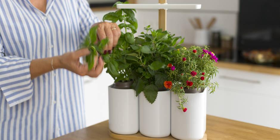Coup de coeur : un mini potager d'intérieur pour récolter à coup sûr même en appartement