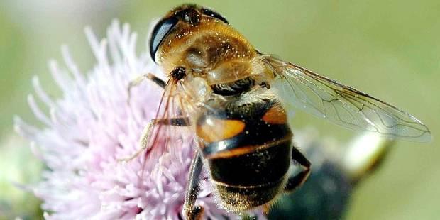Le gouvernement fédéral au chevet des abeilles - La Libre