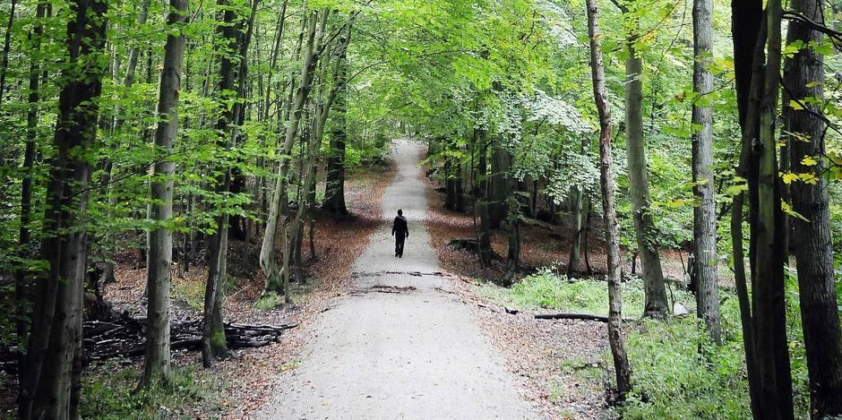 La forêt de Soignes à Bruxelles, automne .