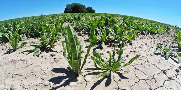 La sécheresse persiste depuis un an en Belgique, selon l'IRM - La Libre
