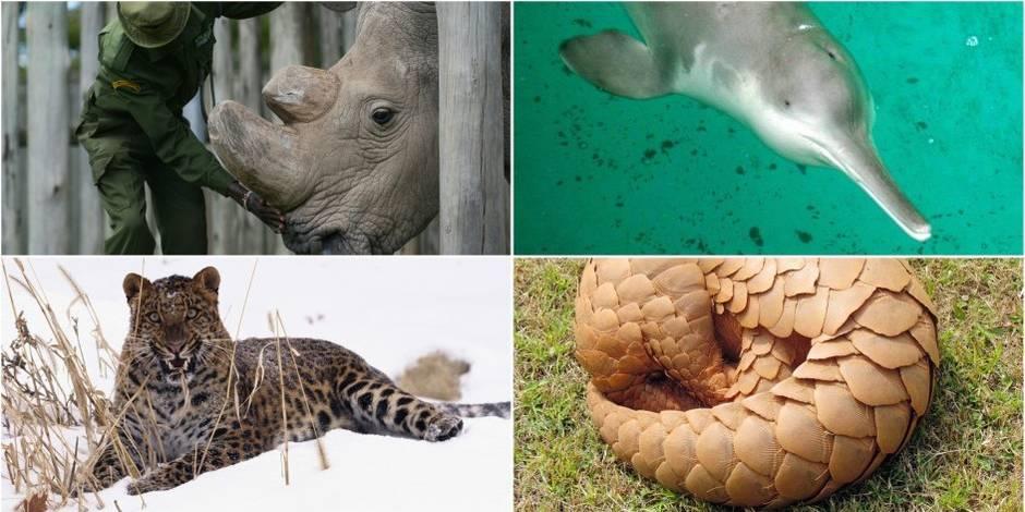 Ces animaux que vous ne verrez (bientôt) plus - La Libre
